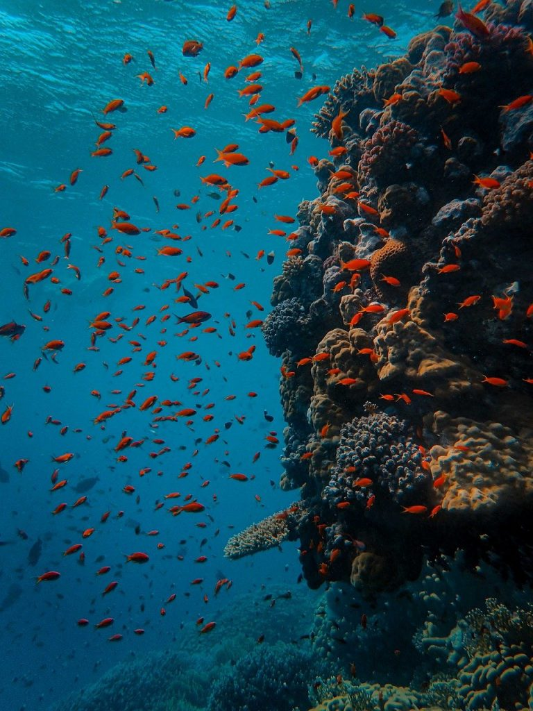 underwater, coral, fish